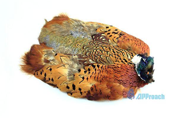 環頸雉全皮