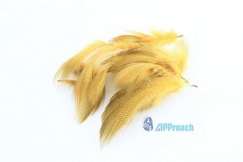 綠頭鴨條紋側翼羽 黃