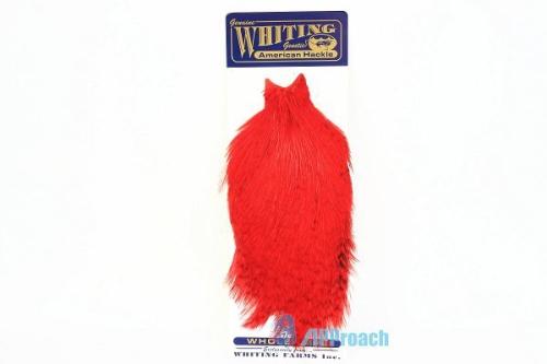 美國雄雞肩部蓑毛 (紅)1