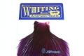 美國雄雞肩部蓑毛 (紫)2