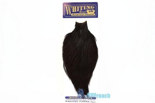 美國雄雞肩部蓑毛 (黑)1