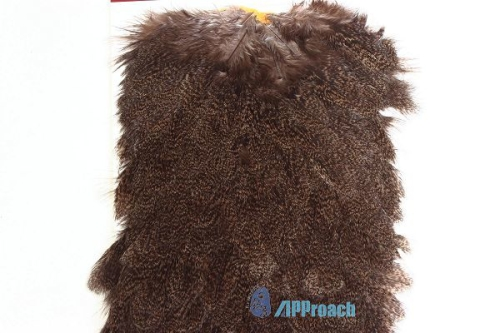 Coq De Leon 西班牙雌雞肩部蓑毛 (棕斑)3
