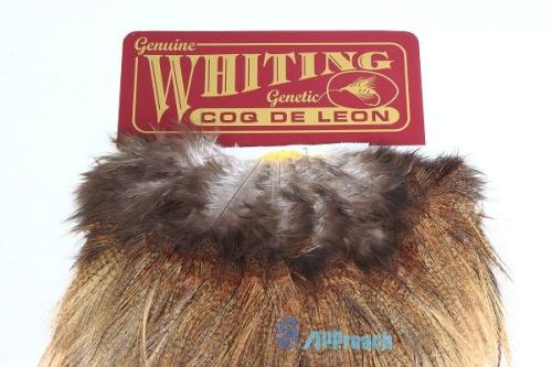 Coq De Leon 西班牙雌雞肩部蓑毛 (淺棕)2