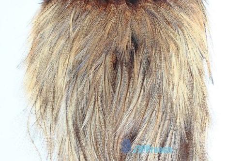 Coq De Leon 西班牙雌雞肩部蓑毛 (淺棕)3