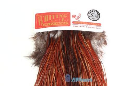 Whiting 銀級鞍部蓑毛(棕)